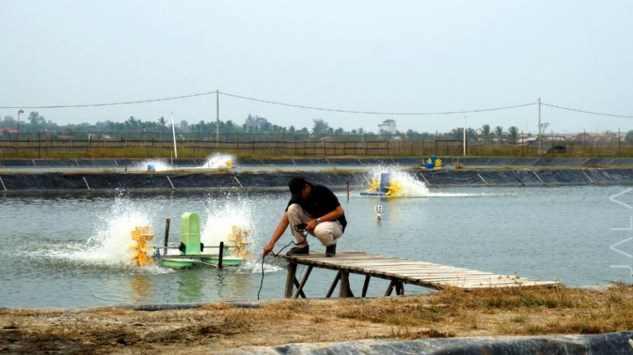menguji kualitas air tambak